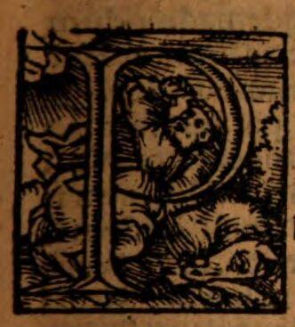 Novum Mainz of alphabets mainz and cologne